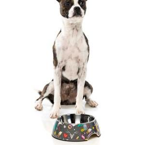 FuzzYard Dog Bowl - Coachella - Medium