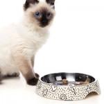 FuzzYard Cat Dish - Kaos