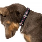 FuzzYard Dog Collar - Fabmingo - Large