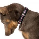 FuzzYard Dog Collar - Fabmingo - Medium