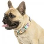 FuzzYard Dog Collar - Footloose - Small