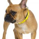 FuzzYard Dog Collar - Monkey Mania - Small