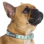 FuzzYard Dog Collar - Tucson - Medium