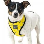 FuzzYard Dog Harness - Monkey Mania - Medium