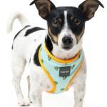 FuzzYard Dog Harness - Tucson - Small