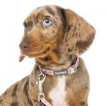 FuzzYard Small Dog or Puppy Collar - North Yeezy -  X Small